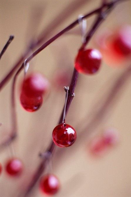 Red Decorations on Branches